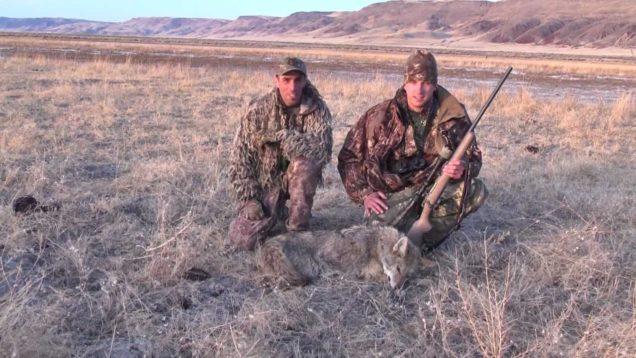 450 Yard Coyote Kill Shot