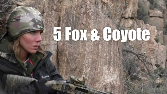 5 Fox & Coyote Guided Hunt