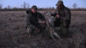 "Bobcat Hunt/Predator Calling with MFK Game-Calls web episode#8 ""Bird Distress"""