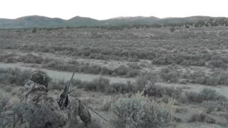 Coyote Hunting 2014 Nevada