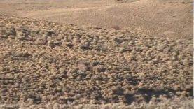 Coyote Hunting Nevada 2012 with Predator Gods