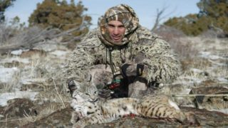 Coyote hunting.. Pack called in.. Bobcat!