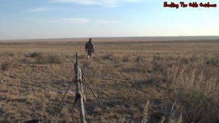 Coyote Hunting-Predator Hunting-BTO 45