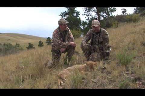 Coyote Hunting – Predator Hunting – Bucking The Odds 14