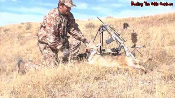 Coyote Hunting – Predator Hunting – Bucking The Odds Video 36