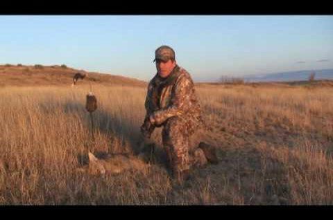Coyote Hunting – Predator Hunting – Bucking the Odds Video 4