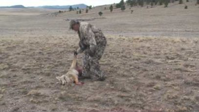 Coyote Hunting – Predator Hunting -Bucking the Odds Videos 3