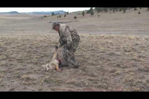 Coyote Hunting – Predator Hunting -Bucking the Odds Videos 3