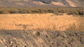 Coyote Hunting Utah with the Predator Gods 2012