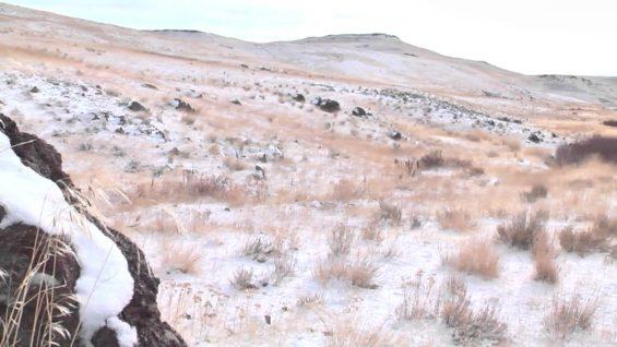 Coyote Hunting VII