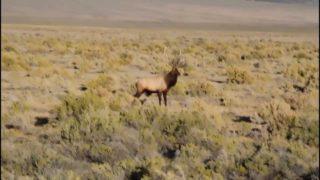 Coyote VS shot gun. Nevada Protect Your Hunt!