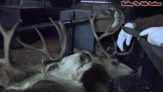 Deer Hunt with Bucking The Odds