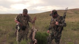 Hunting Coyotes in July! 95 Degree heat