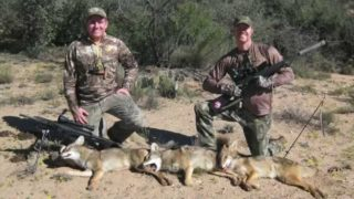 "Predator Beguiled – Episode 2 ""40 minute Coyote shot"""