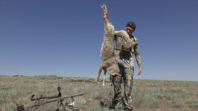 "Coyote Hunting Episode #18 ""Mangy Headshots"""