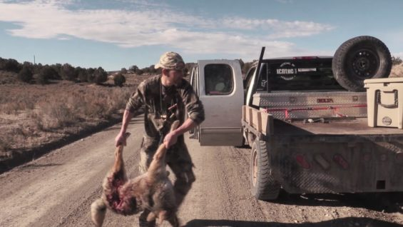 Coyote Hunting – Scouting New Grounds & Shooting Suppressed – Coyote Assassins Episode 22