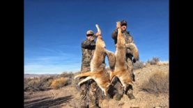 """COYOTE CALLING  """"PATIENCE PAYS OFF"""""""