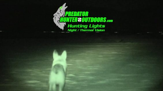 Coyote Hunting – HOW about SOME NIGHT Hunting – Coyote Assassins Episode