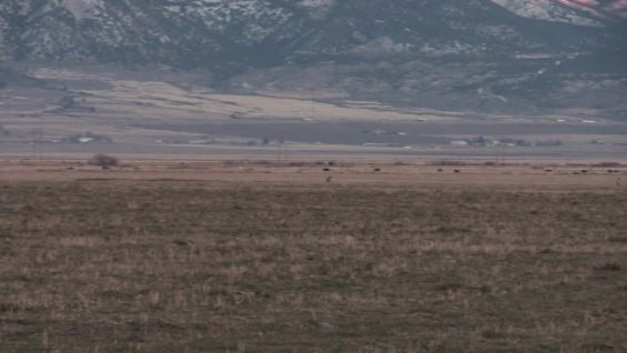 Coyote Hunting – Hunting Around FARM Land – Coyote Assassins Episode 24