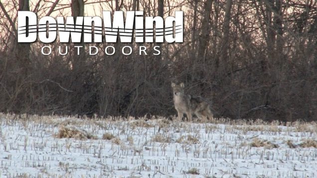 Eastern Coyote Hunting:  Exhaled (DownWind Outdoors)