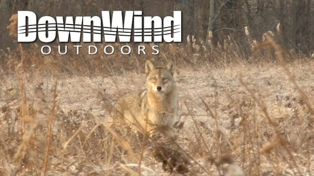 Eastern Coyote Hunting:  Retreat (DownWind Outdoors)