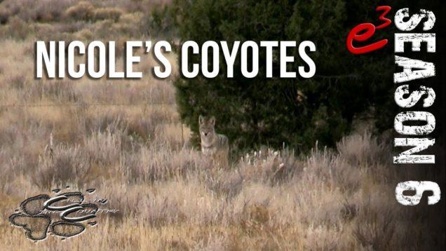 S6 E3 Nicole's Coyotes