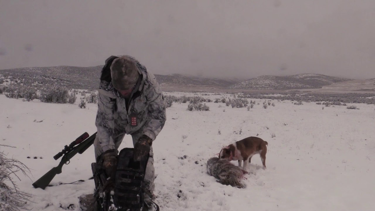 Coyote Hunting -Three Stands Two DOUBLES with ODIE – Coyote Assassins Episode 27