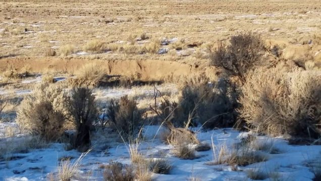 Did you get it? Coyote hunting in New Mexico