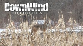 Eastern Coyote Hunting:  Persuaded'um (DownWind Outdoors)