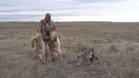 Patience Leads to Monster Coyotes!