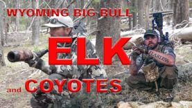 GIANT BULL ELK AND COYOTE HUNTING!!!! Wyoming has alot to offer. Coyote hunting is just one!