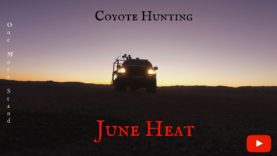 One More Stand June Heat Revised –  Coyote Hunting