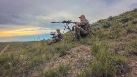 Tough Wyoming Coyotes