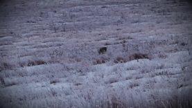 "Coyote Hunting, 3 Coyotes:  C.C. Season 1 E7 ""Frost Bite"""