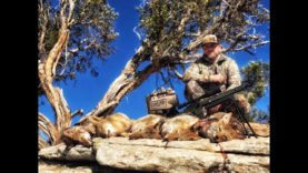 COYOTE CALLING: BACK ON OUR GAME!!