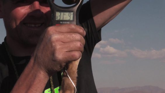 Coyote Hunting – Final weight for previous Episode – Coyote Assassins