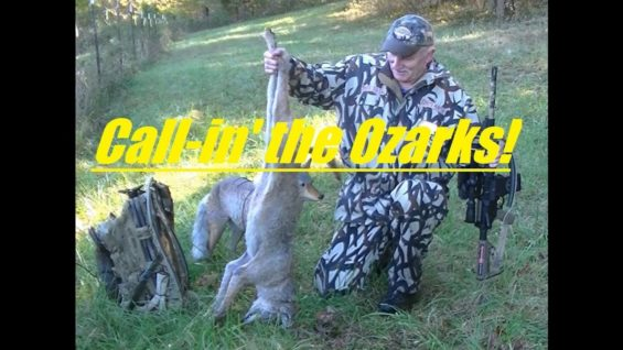 Coyote Hunting in the Ozarks of Missouri, SOLO, number 35…
