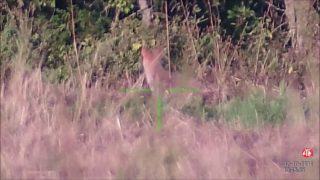 Coyote Hunting Triple First Person View Through The ATN Scope!!