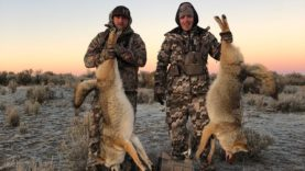 """COYOTE TOUR DAY 7 """"TOO MANY COYOTES!"""""""