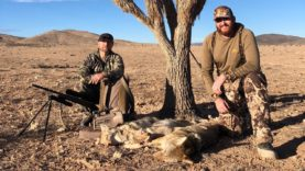 """COYOTE TOUR DAY 8 """"SHED CRAZY IS NOW COYOTE CRAZY!"""""""