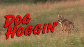 Dog Hoggin' – Coyote Hunting