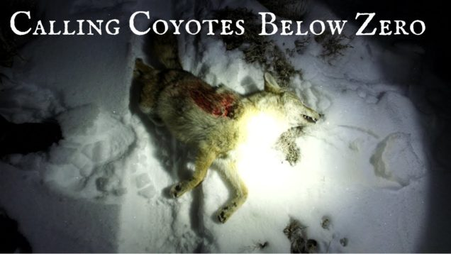 One More Stand Episode Below Zero – Coyote Hunting