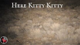 One More Stand Episode Here Kitty Kitty – Coyote Hunting