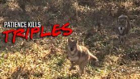 Patience Kills Triples – Coyote Hunting
