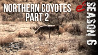 S6 E6 – Northern Coyotes Part 2