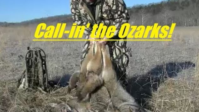 Coyote TRIPLE!! Coyote hunting in the Ozarks of Missouri, SOLO, number 40…