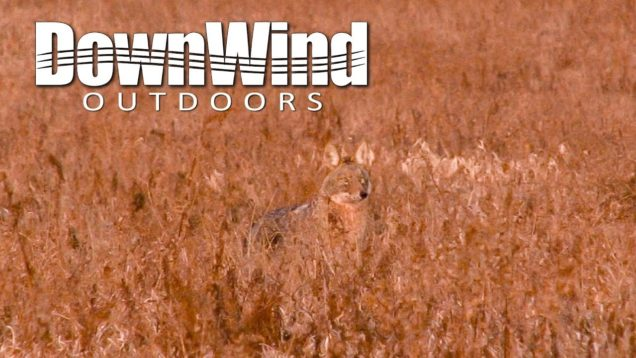 Eastern Coyote Hunting:  The Partner (DownWind Outdoors)