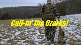Coyote hunting in the Ozarks of Missouri, SOLO, number 41…