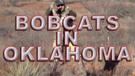 Bobcat and Coyote Hunting and Calling in Oklahoma – Best tips and How to
