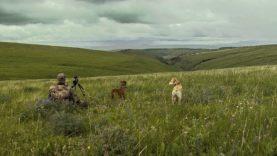 Montana Dogging